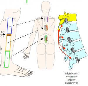 Mikrokinezytrerapia – jak to działa cz. 2